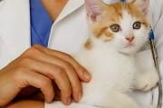 Кошачий ВИЧ против человеческого
