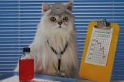 Терапевтический эффект общения с котами подтвержден учеными