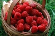 Малина как весомый бонус для нормального зачатия и последующего развития плода