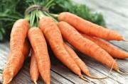 Генетики обещают преподнести моркови статус суперпродукта