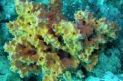 Глубоководные морские губки претендуют на звание лучшего средства против рака