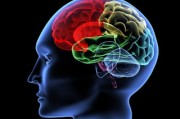 В человеческом мозге обнаружен аналог GPS-навигатора