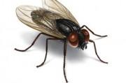 Как комнатная муха пригодилась медикам