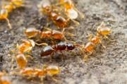 Муравьи дадут старт новому поколению антибиотиков