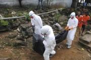 Эволюция Эболы пугает специалистов