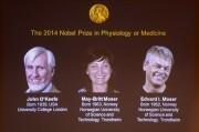 Мозговая GPS-система получила Нобелевскую премию в области медицины
