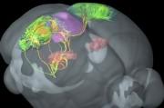 Ученые научились омолаживать мозг