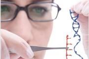 В редактировании эмбриональных ДНК кроется опасность