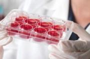 Препарат-универсал – новая надежда человечества в борьбе против рака