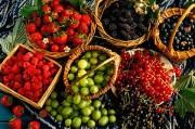 Диабет отступает перед красным вином, ягодами и шоколадом