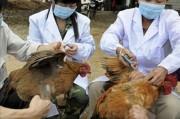 Жители Гонконга готовятся к противостоянию птичьему гриппу