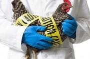 Китайский «птичий грипп» превращается во все более смертоносное заболевание