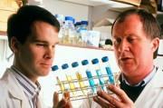 Ингибиторов PARP возможно помогут создать универсальные препараты против рака