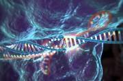 Генетики научились изгонять вирус иммунодефицита из генома