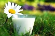 Молоко теряет статус полезного продукта