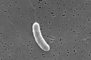 Побережье Штатов подверглось атаке опасного патогена