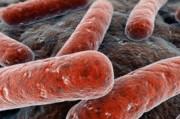 Mycobacterium tuberculosis навсегда или «живучесть» туберкулеза, вопреки законам эволюции